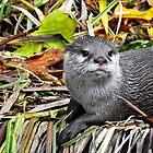 Otter by StudioCorvid