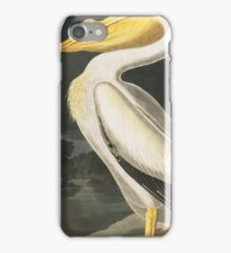 American White Pelican - John James Audubon iPhone Case/Skin