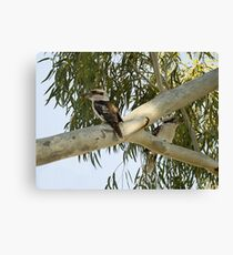 Kookaburras In a Tall Gum Tree Canvas Print