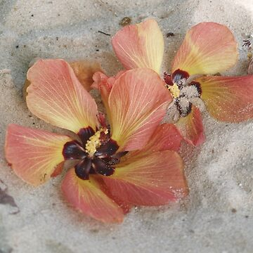 Flower on the beach by LouiseEbreyHill