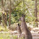 roos by Jan Stead JEMproductions