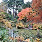 Autumn: Arrived by CreativeEm