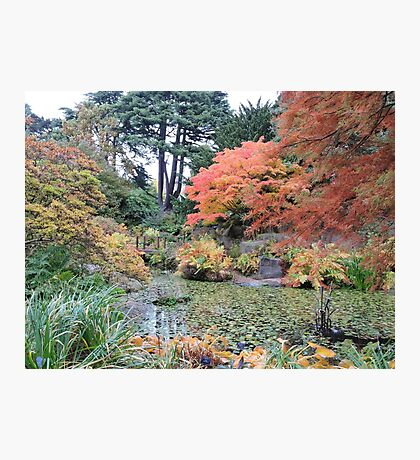 Autumn: Arrived Photographic Print