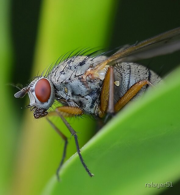 Fly Up Close by relayer51