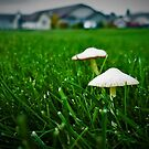 White Caps in the Grass by EvePenman