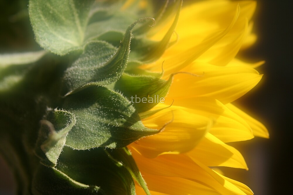 Friends are the Sunshine of Life by Terri~Lynn Bealle