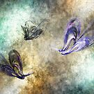 Flight of the butterfly by shalisa