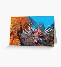 Red Lionfisch - Pazifischer Rotfeuerfisch Greeting Card