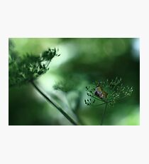 Leaf Fall On Cow Parsley. Jupiter 9 on EOS 7D Photographic Print