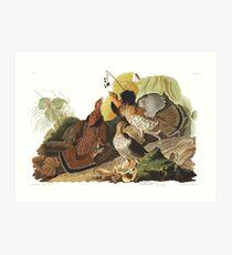 Ruffed Grouse - John James Audubon Art Print