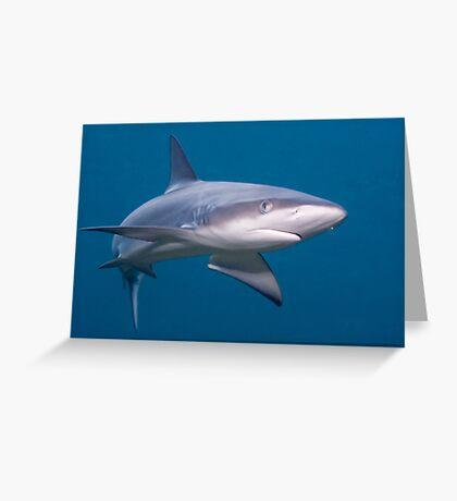 Galapagos Shark Greeting Card