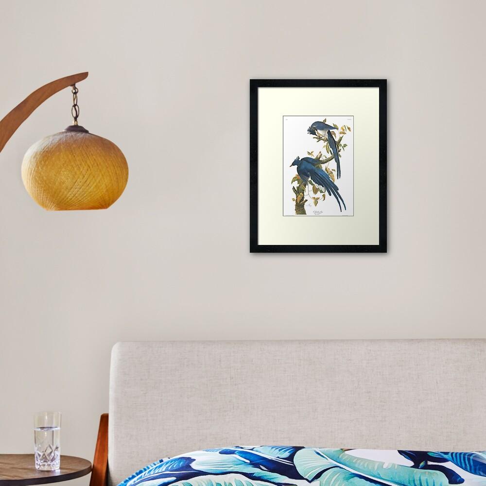 Steller's Jay - John James Audubon Framed Art Print