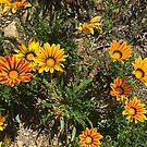 Roadside Flowers by Christine  Wilson