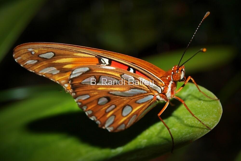 Gorgeous wings by ♥⊱ B. Randi Bailey