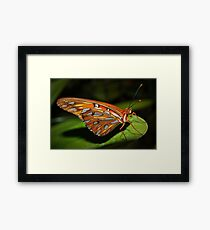 Gorgeous wings Framed Print