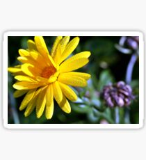 Brother sun bright yellow flower in the morning dew Sticker