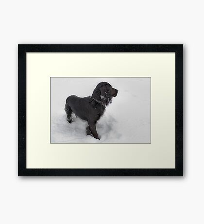 In the Snow Framed Print
