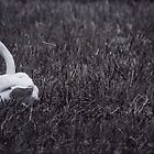 Turn Loose The Swans by SunDwn