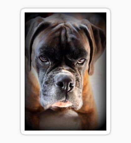 Gehen Sie voran .... Machen Sie meinen Tag ~ Boxer Dogs Series ~ Sticker