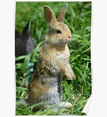 Cornellius the most entertaining bunny ever Poster