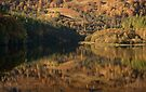 Reflection at Faskally, Pitlochry Scotland by Cliff Williams