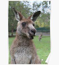 Kangaroo selfie Poster