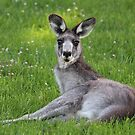 Relaxing Roo by Sharon Brown