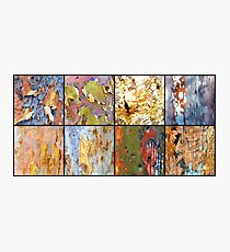 Collage of colorful gumtree bark Photographic Print