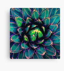 Sweet Agave ( Blue Succulent ) Canvas Print