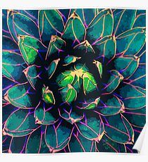 Póster Agave dulce (Suculenta azul)