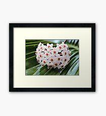 White Florets Framed Print