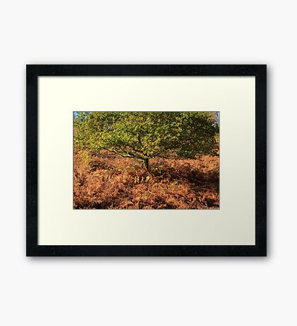 Early Autumn Colours Framed Print