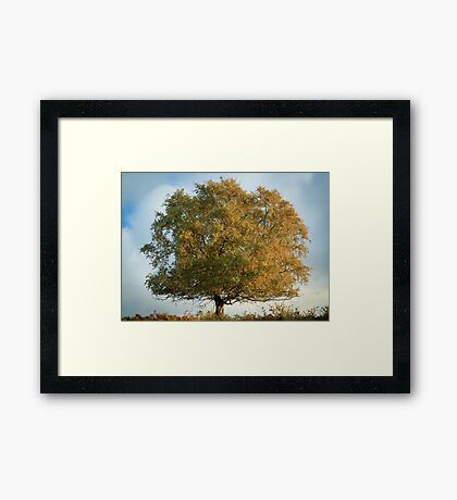 Lone Tree in Autumn Framed Print