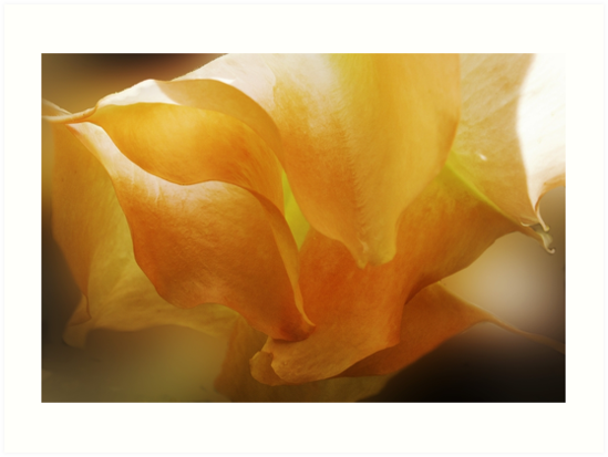 The Colour Orange - Datura by Carole Anne Ferris
