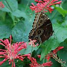 Butterfly in Red by julie08
