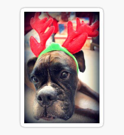 Es ist diese Zeit des Jahres wieder ... Bah Humbug ... - Boxer Dogs Series Sticker