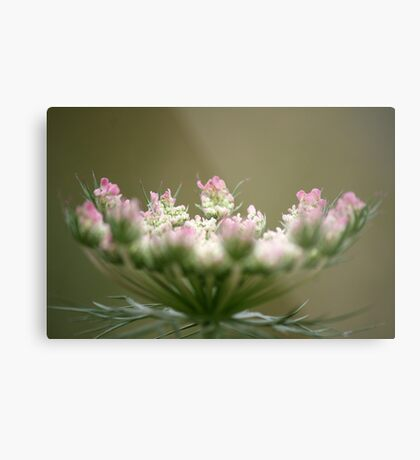 Kiss of Pink Metal Print