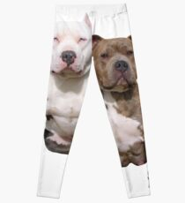 PITBULL BUDDIES  Leggings
