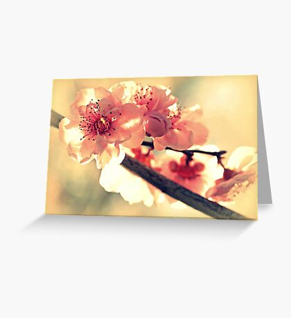 Spring of 2012 Greeting Card