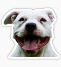 PLAYFUL PUPPY PIT BULL Sticker