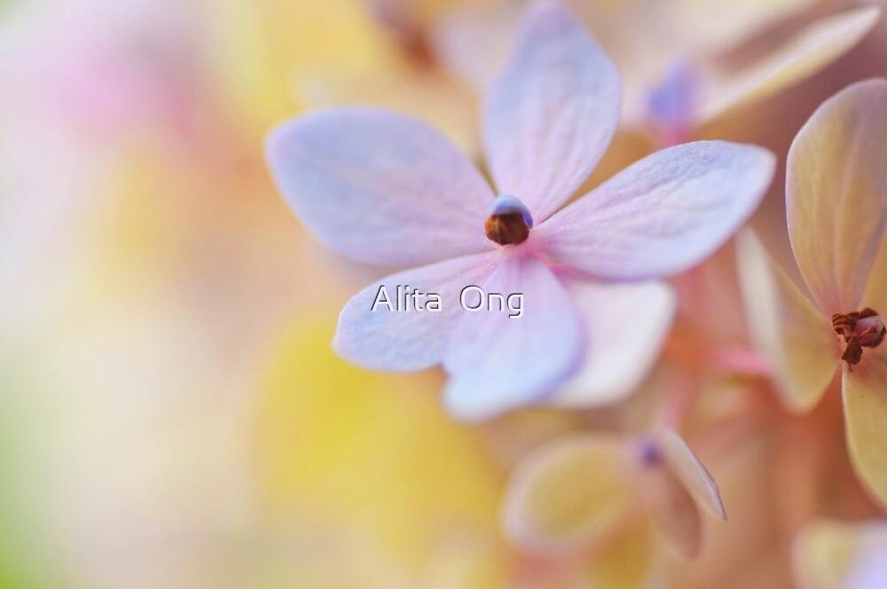 Hydrangea II by Alita  Ong