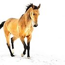 Horse in snow by Dan Shalloe