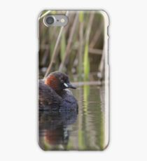A Little Grebe (Tachybaptus ruficollis) adult in front of a reedbed. iPhone Case/Skin