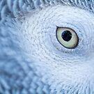 Parakeet Eye by Shaun Colin Bell