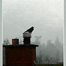 Kilbride crow by dOlier