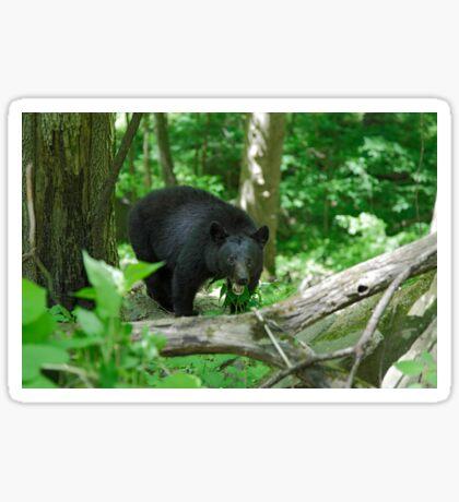 Black Bear II Sticker