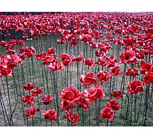 Poppies At The Tower Of London Photographic Print