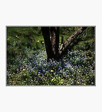 Dance of the Bluets Photographic Print