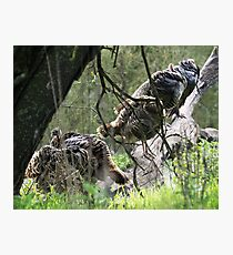 Miserable Turkeys on a Wet Day Photographic Print