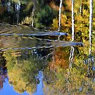 Rippling through Autumn by mikebov